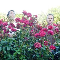 Envoyés dans les roses!