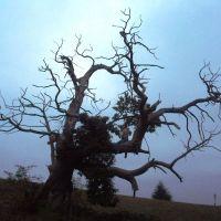 L'arbre-squelette
